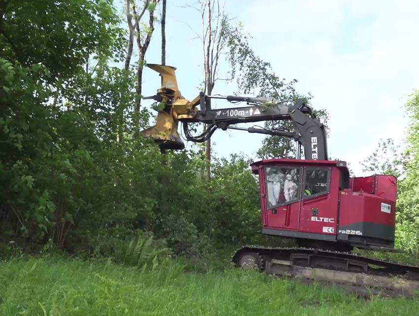 abattage frêne chalarosé
